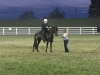 2013-clark-county-horse-show-41