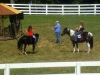 2013-clark-county-horse-show-42