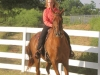 2013-clark-county-horse-show-44