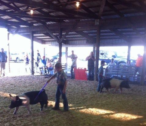 clark-county-fair-2013-102