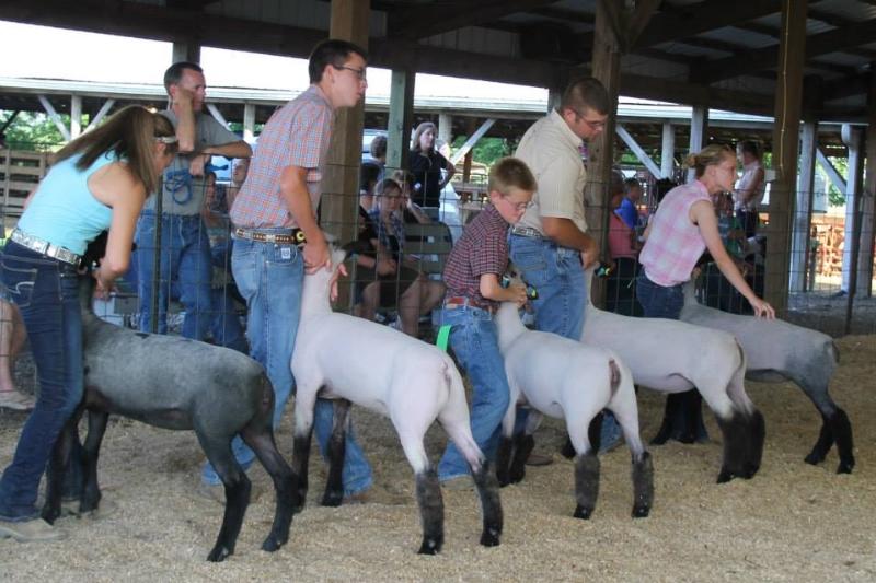 clark-county-fair-2013-146