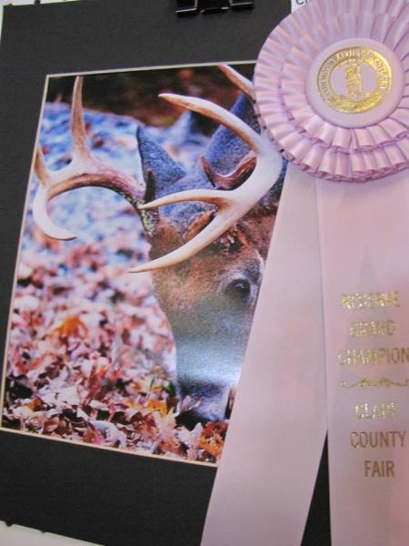 clark-county-fair-2013-56
