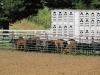 clark-county-fair-2013-19