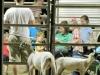 clark-county-fair-2013-89