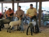 clark-county-fair-2013-98